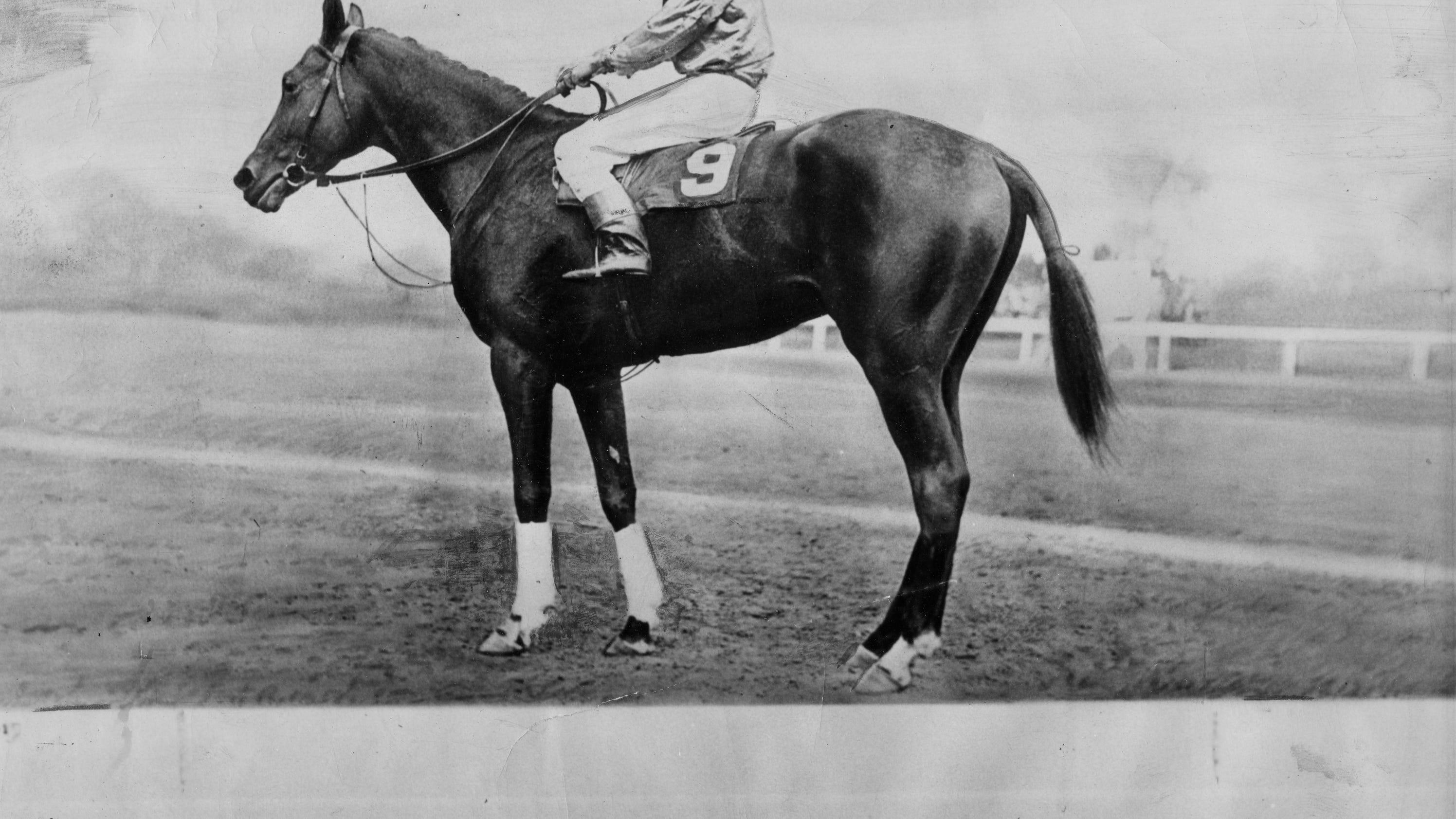 Derby Pferd