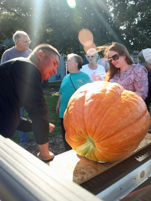 Judges weigh in an entry at the People/Plant Connection's annual pumpkin contest.