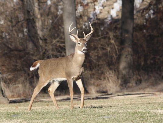 636150632416661713-deer.jpg