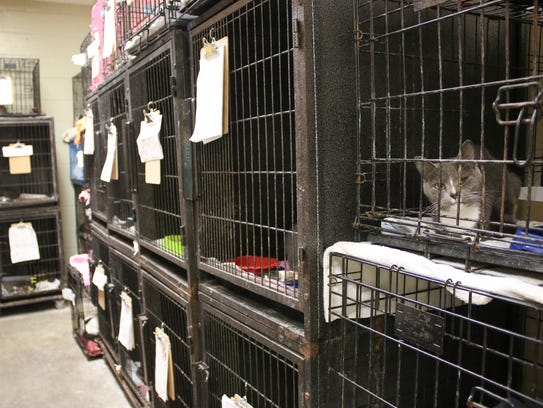 The Montgomery County Animal Control shelter is currently