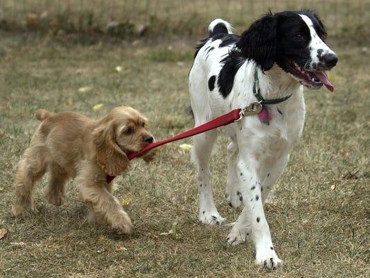 DOGS2_092704MJD.jpg