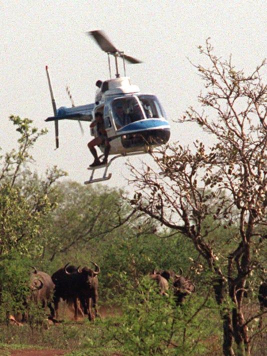 AP SOUTH AFRICA LIONS IN DANGER I ZAF