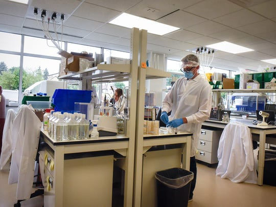 Workers concentrate on projects in a new work area at the recently-expanded Microbiologics building Monday, Aug. 14, in St. Cloud.