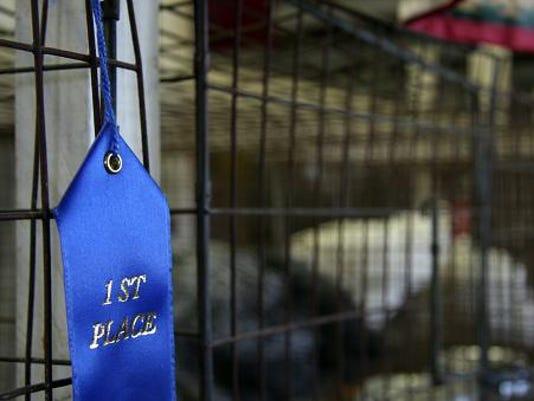stock-fair ribbon-471104403