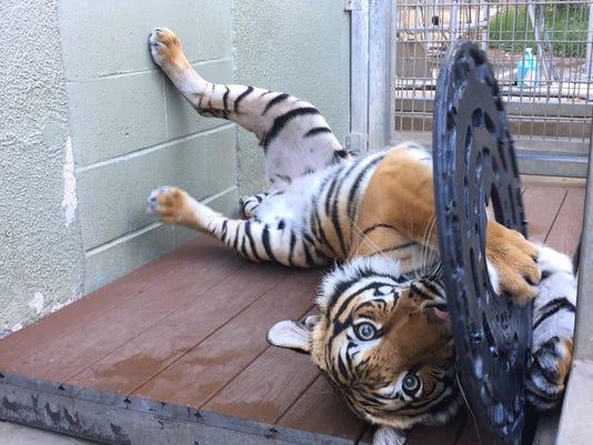 Arya-at-Fresno-Chaffee-Zoo.jpg