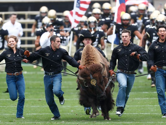 In this Saturday, Sept. 16, 2017, photo, handlers guide the University of Colorado mascot Ralphie onto the gridiron before facing Northern Colorado in an NCAA college football game in Boulder, Colo. The team follows the bison onto the field as part of one of college football's most iconic traditions. (AP Photo/David Zalubowski)