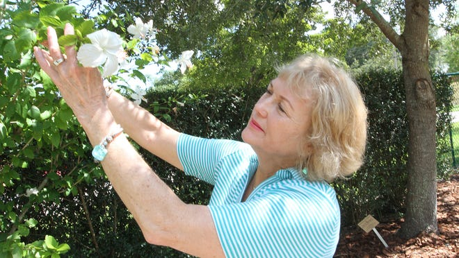 Fort Myers-Lee County Garden Council President Debbie Wyatt-Stottar takes a close look at a Dainty White hibiscus plant at the Berne Davis Gardens on Friday.