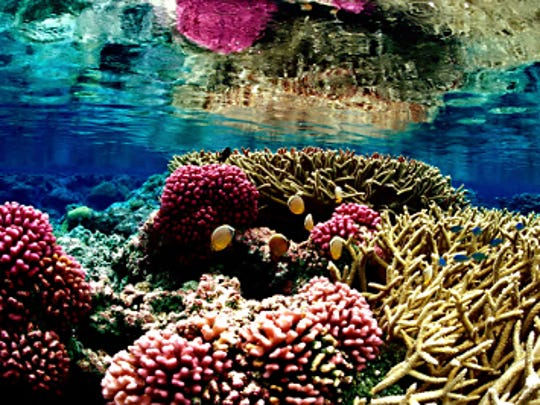 Students in the New Mexico State University Sundt Honors Seminar course will travel to Hawaii over spring break to study coral reefs as a focus of climate change.