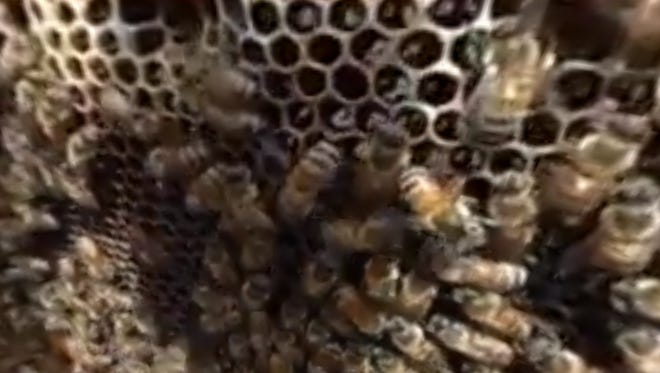 Jay Williams raises over 2 million bees for their honey at his farm in Franklin.
