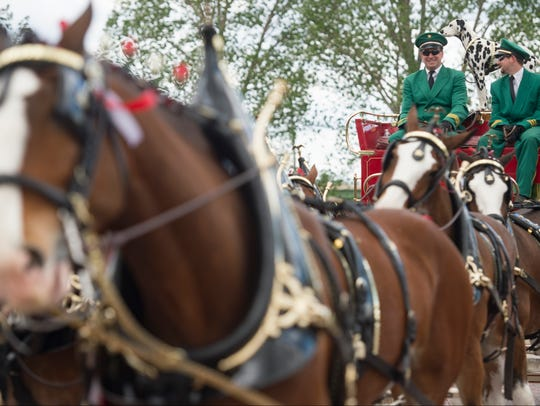 Clydesdales wait to welcome Gov. John Hickenlooper