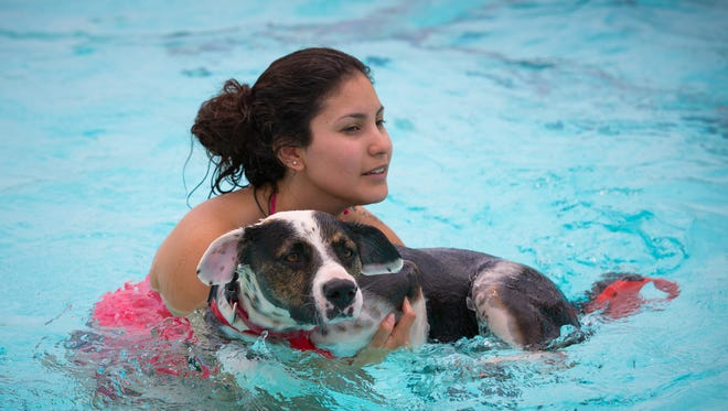 Two-year-old dog Smokey is held in the water during the fourth annual Bow Wow Swim Luau at the Desert Hills Pool, Saturday, August 20, 2016. Organizer Dee Dougil estimates at least 200 people showed up for the event that lets dogs swim in the pool in the day before the pool closes for the season.