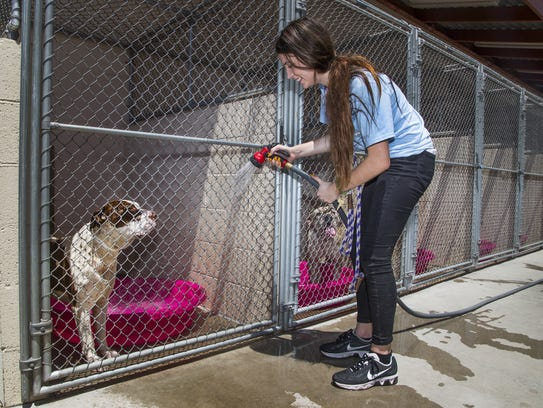 Volunteer Amanda Hicks hoses down the kennels at the