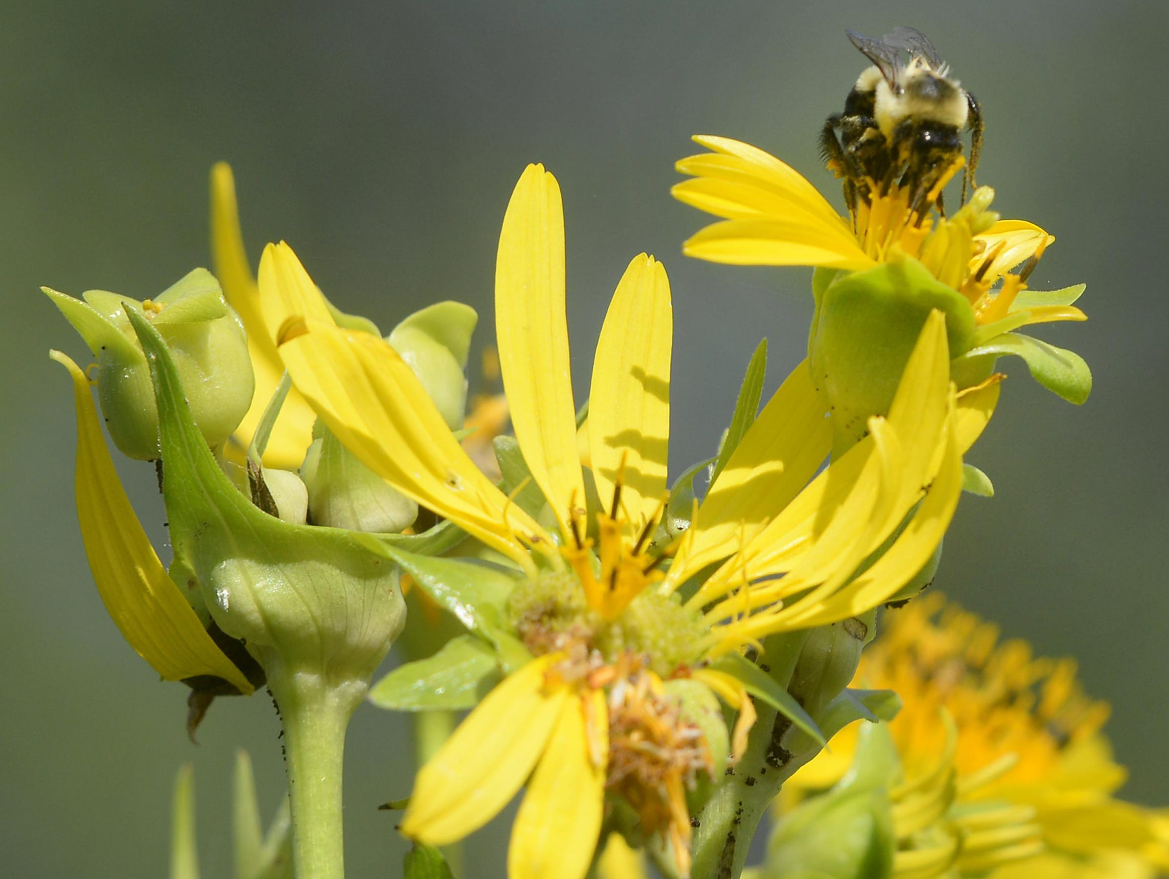 Bees are everywhere carrying out their duties at the