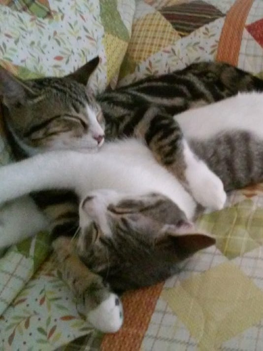 1116-DCF-two-cats.jpg