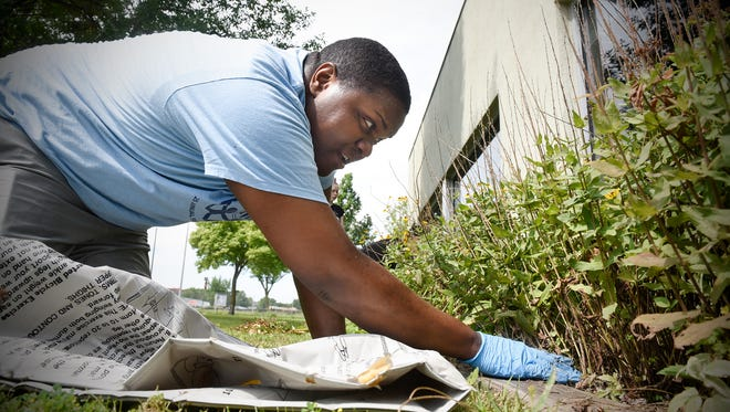 Cortez Riley pulls weeds in a flower garden at the Whitney Senior Center on Tuesday in St. Cloud. Riley is spending the week of his 28th birthday volunteering at several locations.