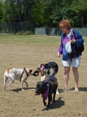 Terri Gillespie of Clayton watches as her dog, Bridget, far left, socializes with other dogs at the park, Keeva, center, and Eagle, in front. Photo/Jodi Streahle