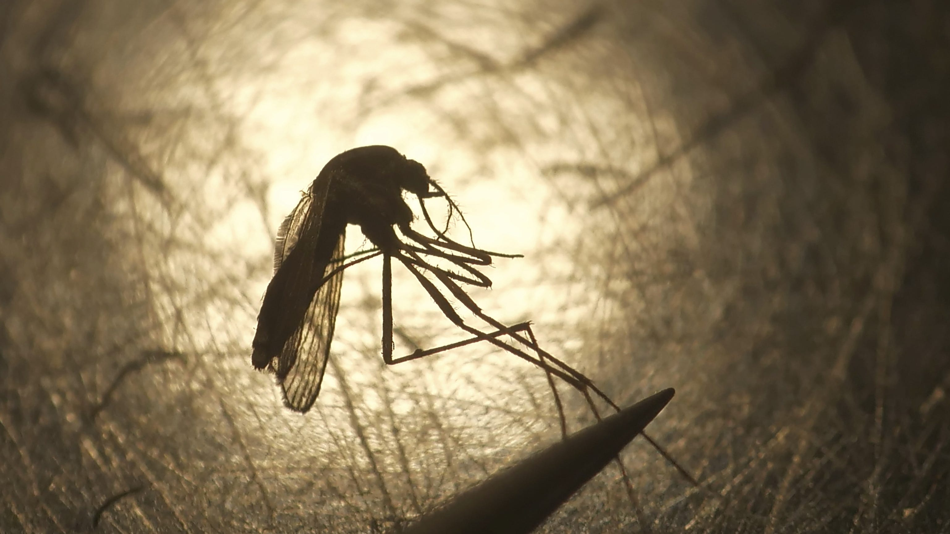 Rare mosquito-born virus suspected in Michigan: 10 counties urged to cancel outdoor events - Detroit Free Press
