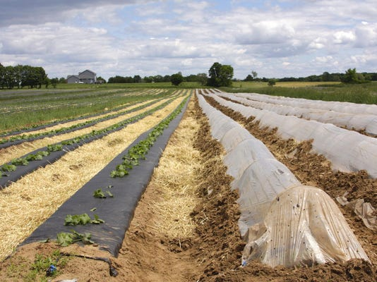 Field-to-table fruits, veggies