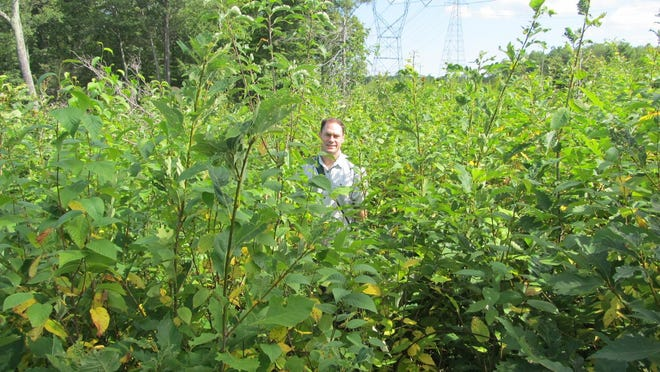 In a photo taken this year, John Cecil stands in a 2012 harvest area in the Sparta Mountain Wildlife Management Area.