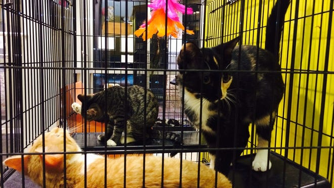 Cats await adoption at the Humane Society of Marathon County on Dec. 14, 2014.