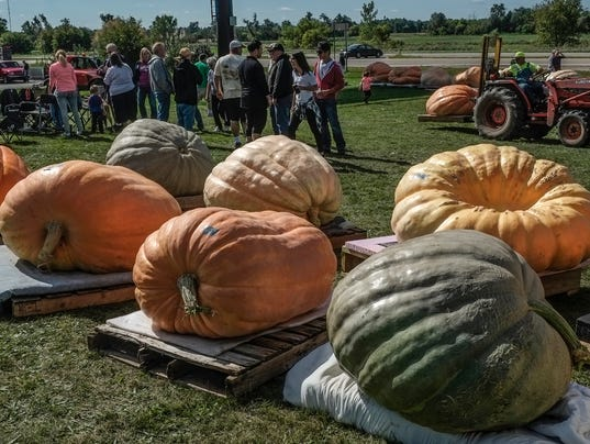 636103275310804846-giant-pumpkins-1.jpg