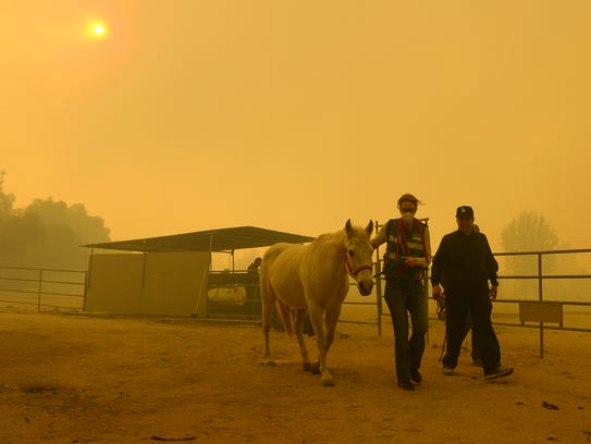 Horses are evacuated from a ranch along Kagel Canyon