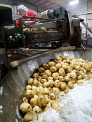 Potatoes are cleaned before becoming potato sticks