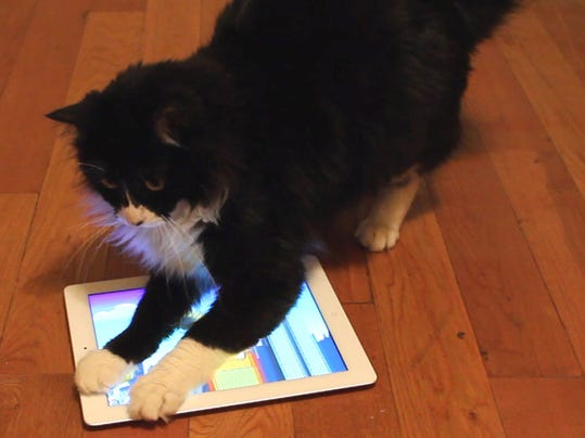 Pets-Apps for Cats_Stan.jpg