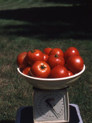 This 10-pound bowl of fresh tomatoes is enough to prepare fresh tomato sauce for several meals this winter.