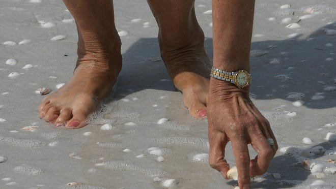 Learn about shells found on the beach at Delnor-Wiggins Pass State Park, in Naples on Sunday.
