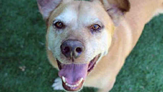 West County Pet of the Week is Fred.