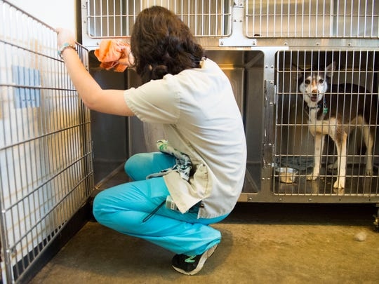 Kristina Kravchenko cleans cages at Ideal Veterinary Hospital in Oak Ridge on Tuesday, May 2, 2017. Kravchenko, 17, is a kennel technician there and is graduating from the University of Tennessee with a degree in animal science this month.