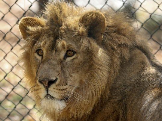 Jordan Lions Rescued