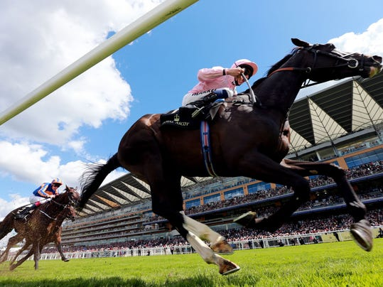The Fugue ridden by William Buick, leads the field, on their way to victory in the Prince of Wales's Stakes, during Day Two of the 2014 Royal Ascot Meeting in Ascot, England, Wednesday June 18, 2014. (AP Photo/PA, David Davies) UNITED KINGDOM OUT