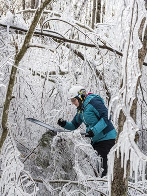 Wildlife biology student Wendy Leuenberger measures ice accumulation after scientists sprayed water on trees the night before in the Hubbard Brook Experimental Forest in Woodstock, N.H.