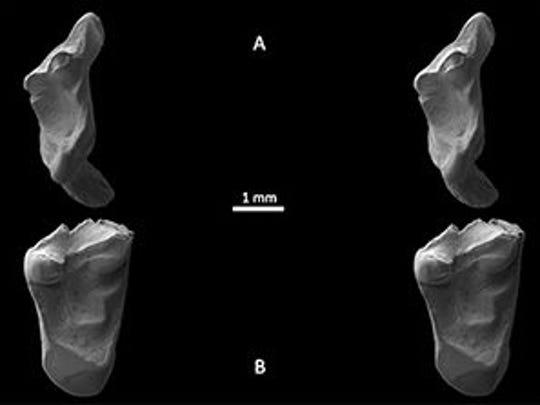 The teeth under an electron microscope.