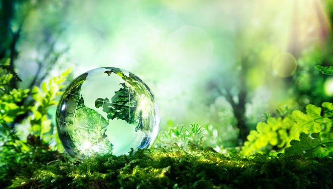 Glass globe in a forest.