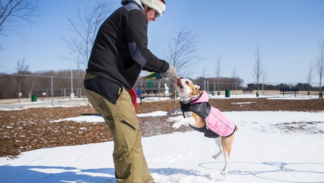 John Blouse swings his one year-old bulldog Miss Piggy in the air as they play tug in the snow at the Glasgow Park dog park on Sunday afternoon.