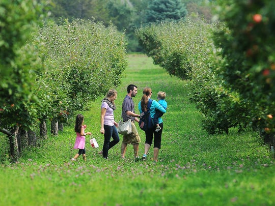 It's the high season for pick-your-own apples, which is a great family event.