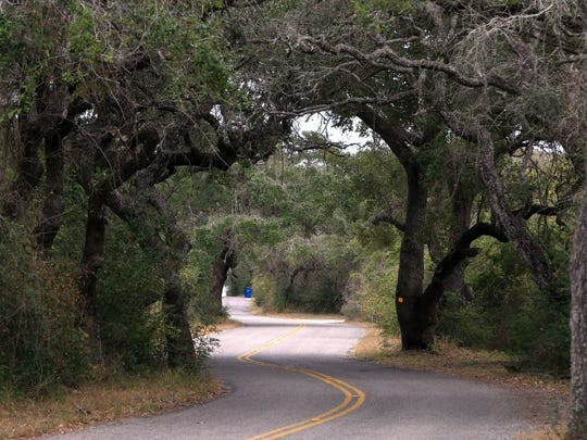 GABE HERNANDEZ/CALLER-TIMES A winding road leads to The Big Tree Wednesday, Jan. 13, 2016, at Goose Island State Park in Rockport.