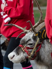 What's a Santaland parade without real reindeer?