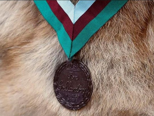 The Dickin Medal, worn by Military working dog Ayron