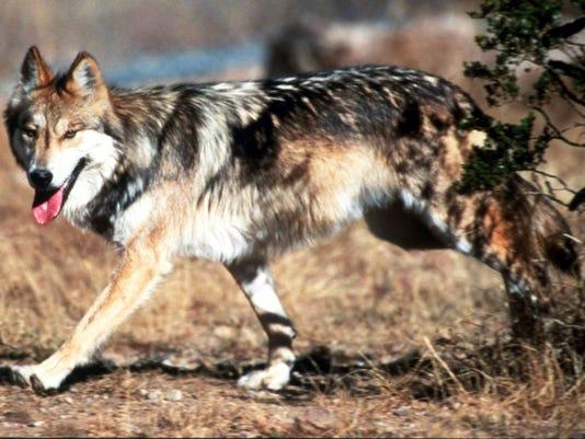Endangered Wolves.jpg