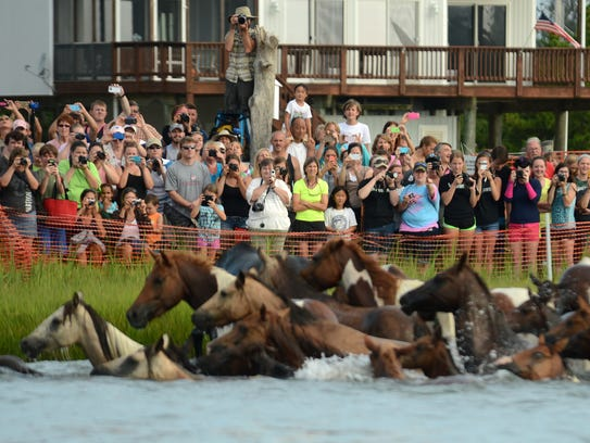 Spectators take photographs of the Chincoteague Pony