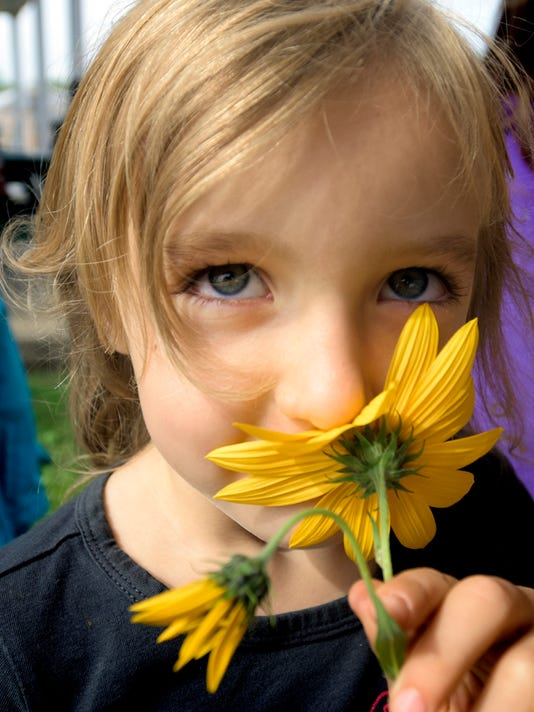 Marilla Moore, 6, of Red Lion, smells a Jerusalem artichoke flower she found while foraging during a community education program at Horn Farm Center Tuesday, Sept. 22, 2015. The center hosted home-schooled students and their families for a presentation on its summer kitchen where the students baked pretzels in a historic Squirrel Tail brick oven and learned about foraging for edibles. The center is hosting its fourth Homesteading Education Day Saturday, Sept. 26, which includes breakfast and lunch selections made in the brick oven. Classes on topics ranging from farming to food are available. The cost is $35.00 which includes the two meals, beverages and a choice of three classes. Registration is available at the center's website at http://hornfarmcenter.org. Bill Kalina - bkalina@yorkdispatch.com