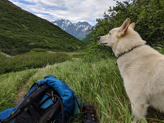 A picture Amelia Milling took of Nanook during their