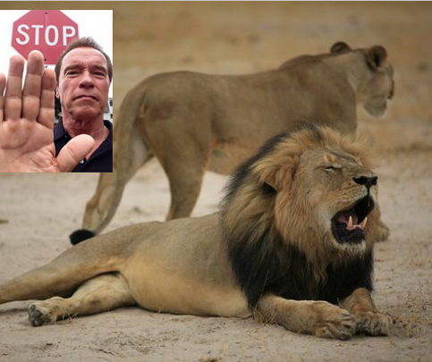 "Actor and former governor of California Arnold Schwarzenegger told his Facebook followers it's ""ballsy to join the military -- not kill big cats."""