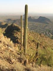 As seen from the summit of Sunrise Peak, Scottsdale