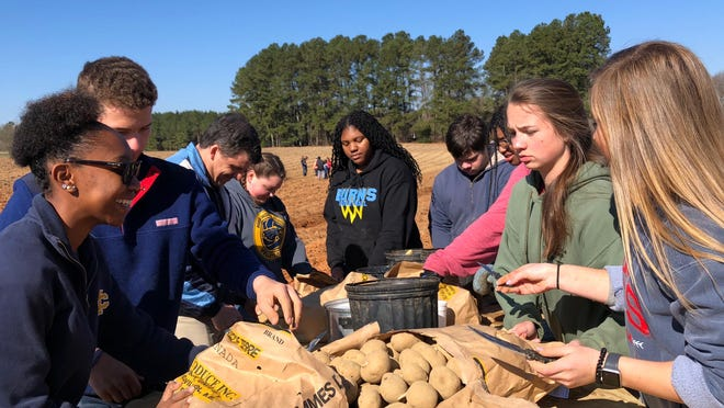 Junior Civitans from various Cleveland County Schools cut potatoes for the Cleveland County Potato Project during a previous harvest.