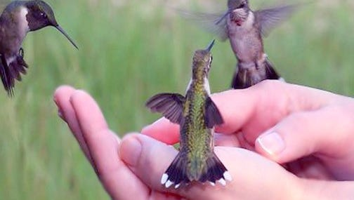 The annual Hummingbird Festival will take place Saturday and Sunday at Little Toad Creek Inn & Tavern.